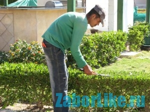 trimming_the_hedges_12_2011